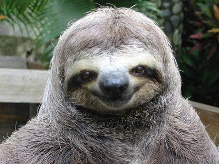Image result for sloths